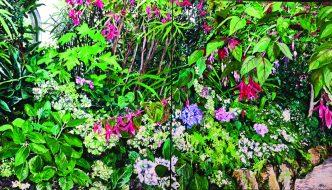 Jo Reitze, In the Conservatory, Fitzroy Gardens, oil on linen, 1150 x 2000mm