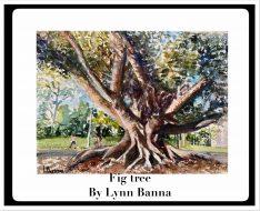 LYNN BANNA FIG TREE